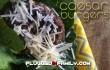 Caesar Burgers ©2014 Plugged In Family ©2014 Wright Media LLC