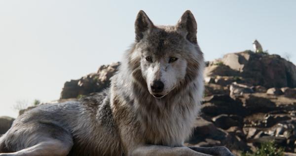 Wolf Raksha from The Jungle Book