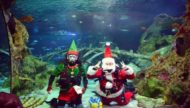 Scuba Santa Dive for Merry Fishmas at SEA LIFE Arizona