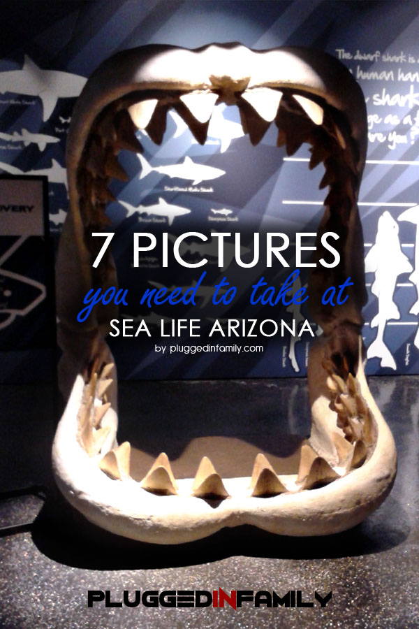 7 Pictures You Need to Take at SEA LIFE Arizona